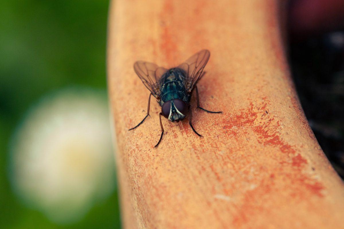 Sposób na muchy. Jak się ich pozbyć z domu?